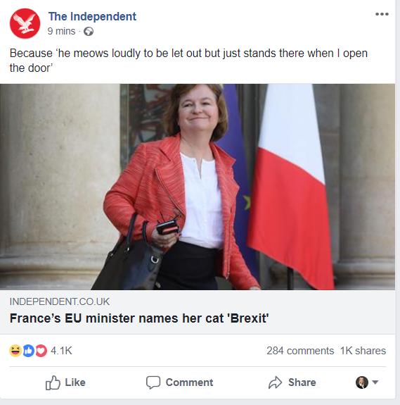 brexit cat